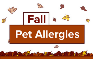 Fall Pet Allergies Infographic by Chem-Dry