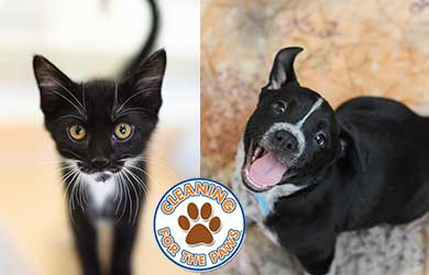 Chem-Dry cares about rescue pet adoption and proudly supports Best Friends Animal Society