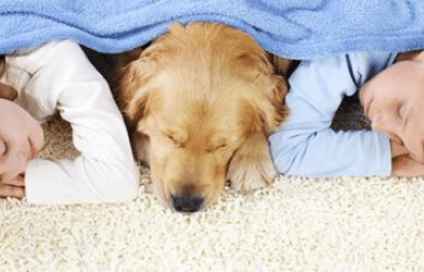 Natural Carpet Cleaning for Pets