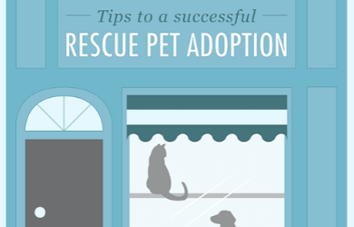 Tips to a Successful Rescue Pet Adoption