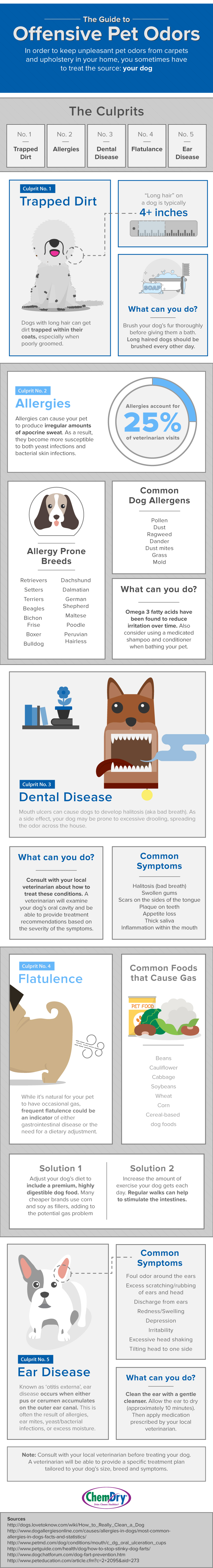 Pet Odors Infographic by Chem-Dry